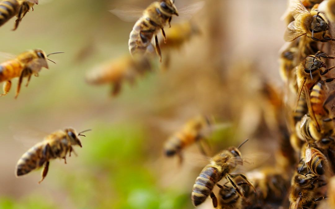 Doin' Right: Dixie Vodka Supports The Bee Cause Project